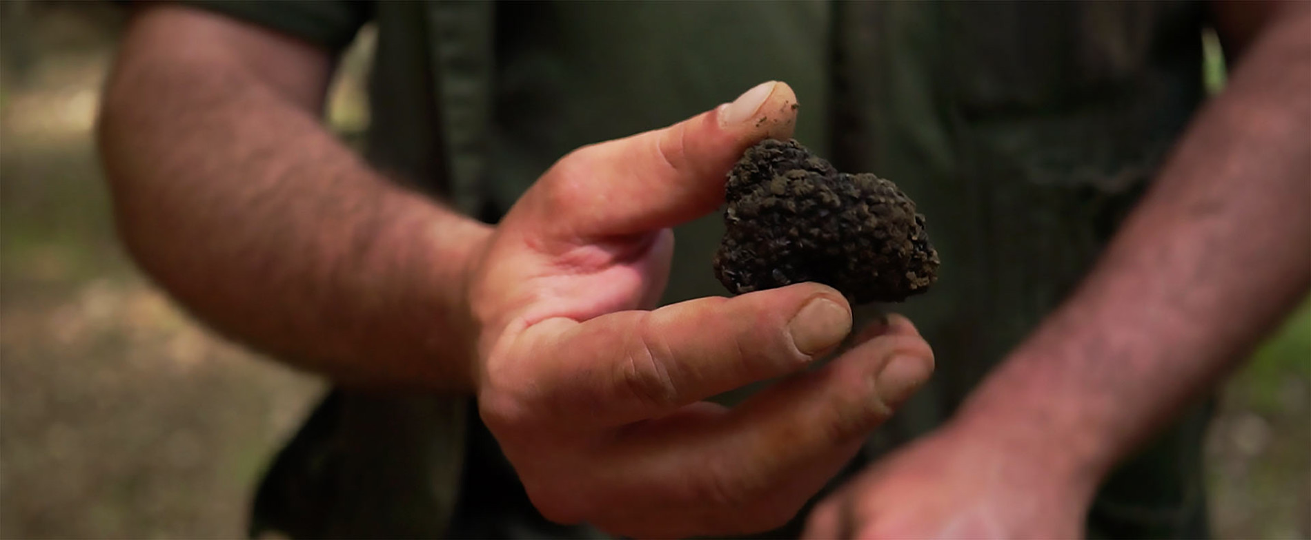 Histoire de truffes