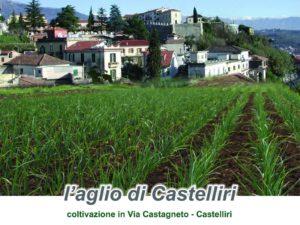 L'ail rouge de Castelliri